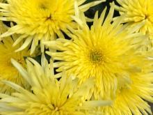 fiore1.jpg