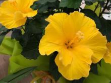 fiori-treviso22.jpg